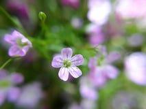 Droppe på blommor royaltyfria bilder