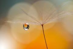 Droppe på den blom- bakgrundscloseupen Stillsamt abstrakt closeupkonstfotografi Tryck för tapet Blom- fantasidesign Royaltyfri Bild