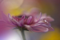 Droppe på den gula bakgrundscloseupen Stillsamt abstrakt closeupkonstfotografi Tryck för tapet Blom- fantasidesign Royaltyfri Bild