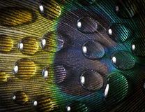Droppe på en påfågelfjäder royaltyfri fotografi