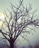 Droppe på trädet royaltyfri foto