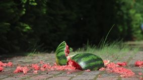 Dropped watermelon crashing to the ground stock footage