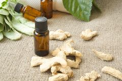 A dropper bottle of ginger essential oil. A dropper bottle of ginger root essential oil. Dried ginger root in the background on sackcloth. Free space for a text stock photos