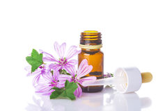 Dropper bottle with mallow malva extract Royalty Free Stock Photography