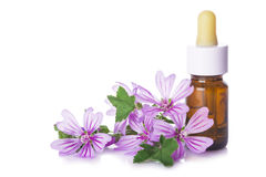 Dropper bottle with mallow malva extract. Or essential oil isolated on a white background Royalty Free Stock Photo