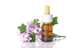 Dropper bottle with mallow malva extract. Or essential oil isolated on a white background Stock Image