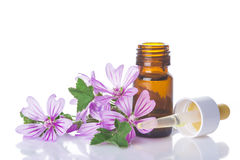 Dropper bottle with mallow malva extract. Or essential oil isolated on a white background Stock Photos