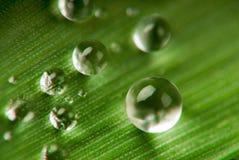 droppgräs royaltyfri fotografi