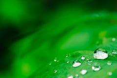droppgreen royaltyfria foton