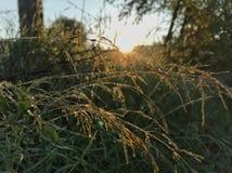 droppgreen låter vara naturvatten Royaltyfria Bilder
