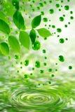 droppgreen låter vara vatten Arkivbilder