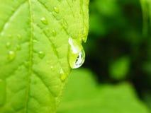 droppgreen låter vara vatten Royaltyfri Fotografi