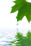 droppleafvatten Royaltyfri Foto