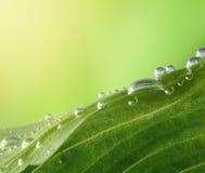 droppleafvatten Arkivbild