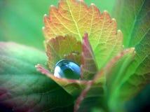 droppvatten Royaltyfria Bilder