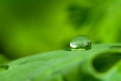 droppvatten Royaltyfria Foton