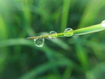 Droppvatten på gräs royaltyfria bilder