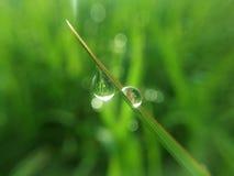 Droppvatten på gräs arkivbild