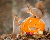 Droppy Halloween Stockfoto