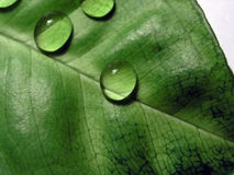 Drops. On leaf Royalty Free Stock Photography