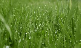 Drops. Grass background Royalty Free Stock Images