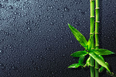 Drops and bamboo on black Royalty Free Stock Images