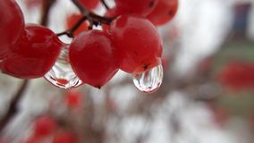 Drops on berries stock photography