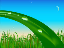 Drops on blade of grass. Drops of morning dew on a blade grass Royalty Free Stock Photo