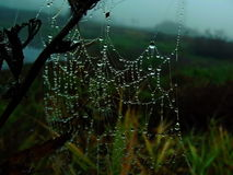 Drops caught cobwebs. Walk on a spring meadow gives a lot of interesting, if you look carefully at his feet Stock Photos