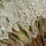 Drops close up Royalty Free Stock Photography