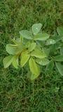 #Drops del #Dew Fotografie Stock