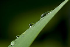 Drops of dew Royalty Free Stock Photos