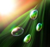 Drops of dew. Bright drops of dew on the foliage vector illustration