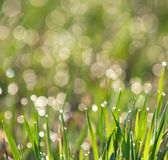 Drops of dew. On morning grass Stock Photos