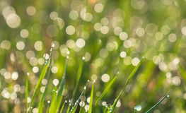 Drops of dew Royalty Free Stock Photography