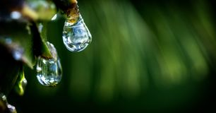 Drops of dew on the beautiful green grass, background close up. Drops of dew on the beautiful green grass background Royalty Free Stock Photos