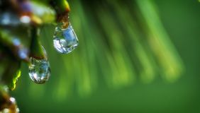 Drops of dew on the beautiful green grass, background close up. Drops of dew on the beautiful green grass background Stock Image