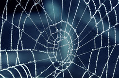 Drops of dew covered spider web tracery early in the morning Stock Photo