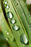 Drops of dew on the grass Stock Image