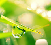 Drops of dew on a grass. Dew rain grass macro water drops leaves Stock Photography