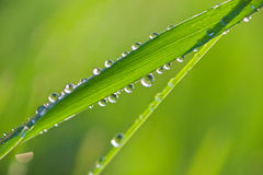 Drops of dew on a grass Stock Photos