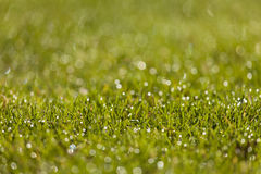 Drops of dew on a grass.  stock image