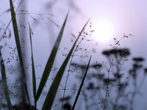 Drops of dew on a grass. In a fog Royalty Free Stock Images