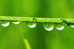Drops of dew on a grass. Macro, meadow, morning, nature Stock Photo