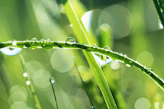 Drops of dew on a grass Stock Photo