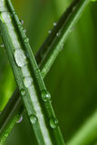 Dew on the grass. Drops of dew on the grass close up Royalty Free Stock Photography
