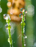 Drops of dew on the grass Royalty Free Stock Photography