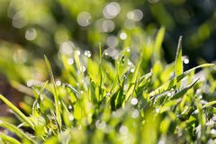 Drops of dew on the grass Royalty Free Stock Photos