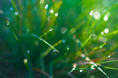 Drops of dew on the grass Stock Photos