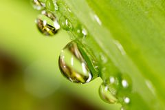 Drops of dew on the grass. macro Stock Photo